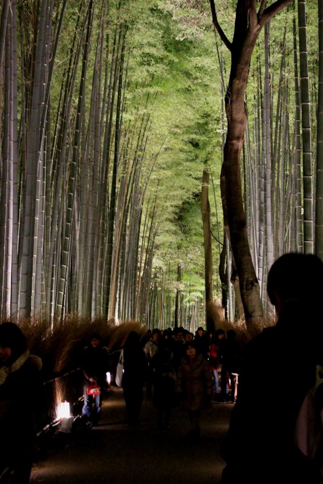 嵐山花灯路 竹林2